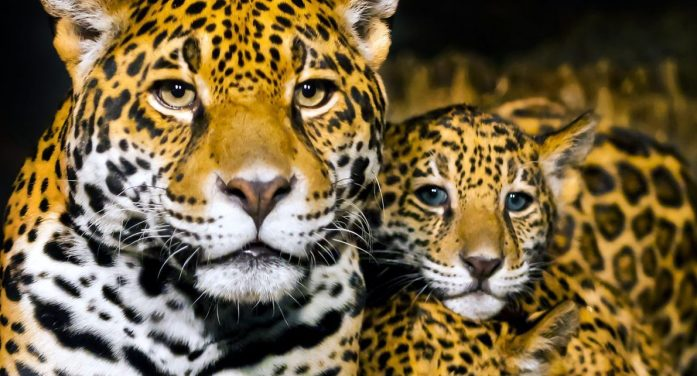 Colombia's Jaguar Refuge